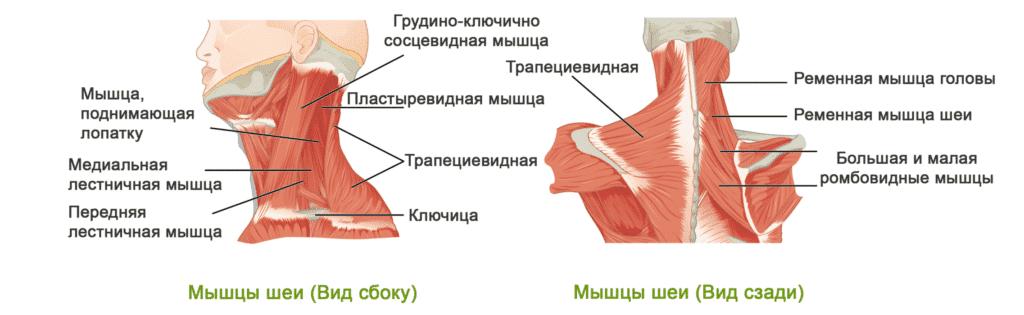 Лечение боли в шее в Полтаве