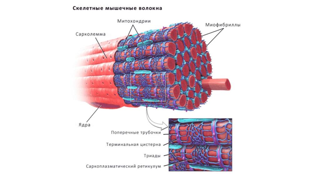 Укрепление мышц в Полтаве